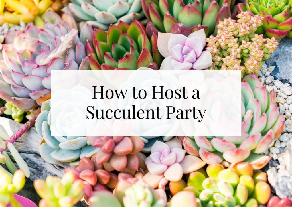 how to host a succulent party