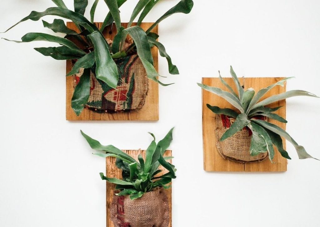How to Plant a Staghorn Fern on a Board